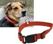 Hunde-Halsband leuchtend mit LED